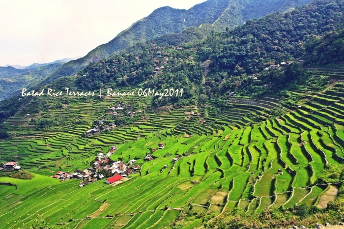 Batad's amphitheater-like terraces--a view from Batad's Highest Point! [click on image for a full view]