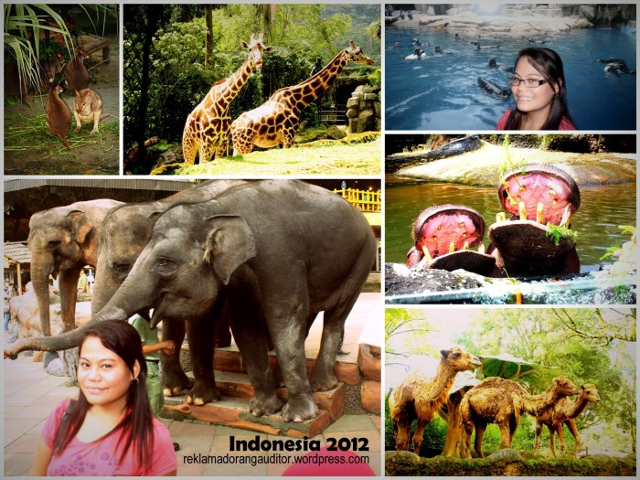 #5 - Taman Safari, Bogor